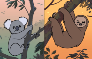 the new lars sloths koalas