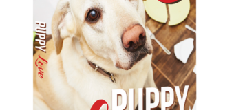 "Author Amber Meyer Teaches ""Puppy Love: Life Lessons In Disobedience"" – Interview"
