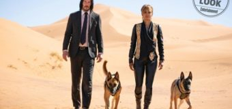 John Wick 3 Movie Review: Keanu Reeves Teams up with Halle Berry and Her Killer Dogs!