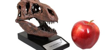 "Toynk Toys' Licensed ""Smithsonian T-Rex Skull Replica"" Available for Pre-Order!"