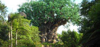 Walt Disney World Finally Sets Reopening Dates