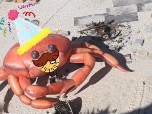 Party Crab!