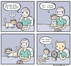 Dr Cat MD